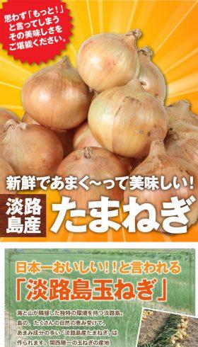 淡路玉葱10kg