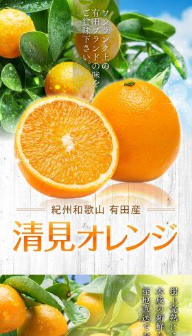 ワンランク上の清見オレンジ